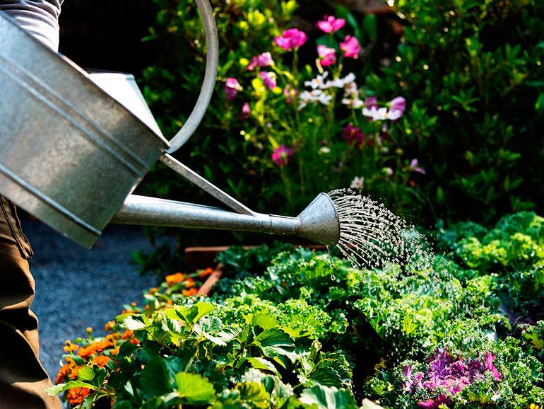 Cuando aumenta la temperatura debemos cuidar el jardín