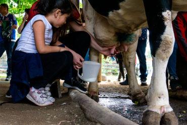 Niña en la granja educativa con ternero