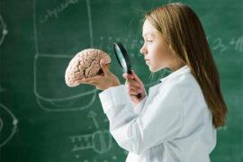 La mielina es fundamental en el cerebro